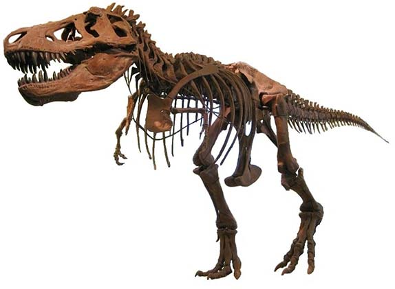 Tirannosauro Amnh 5027