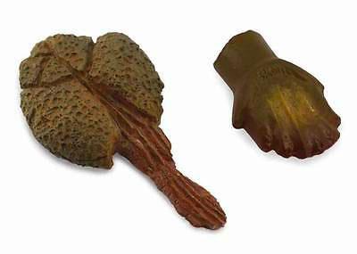 Anchilosauro Mazza Caudale