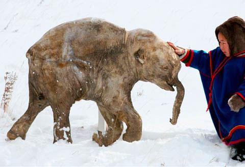 Mammut Nani