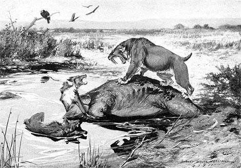 Tigre Dai Denti A Sciabola Rancho La Brea