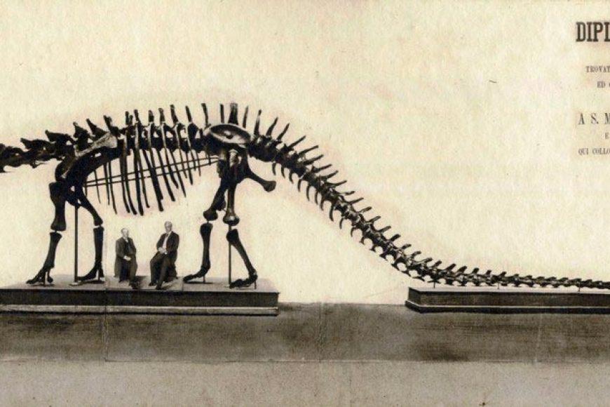 Un dinosauro americano a Bologna – Museo Giovanni Cappellini