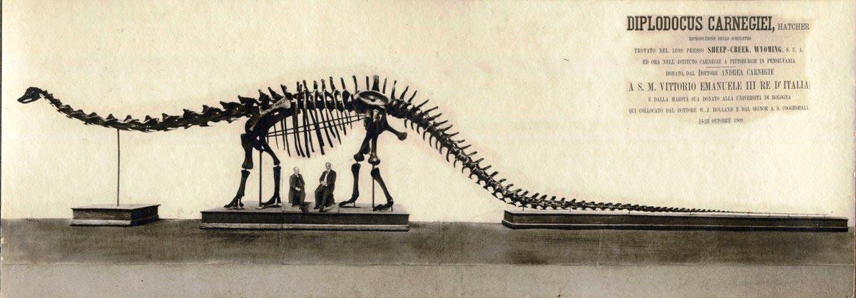 Un Dinosauro Americano A Bologna
