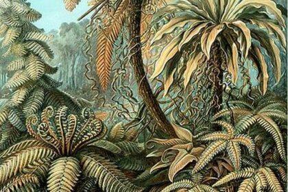 le Piante Preistoriche dei Dinosauri